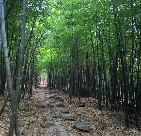 Moganshan bamboo forest hike