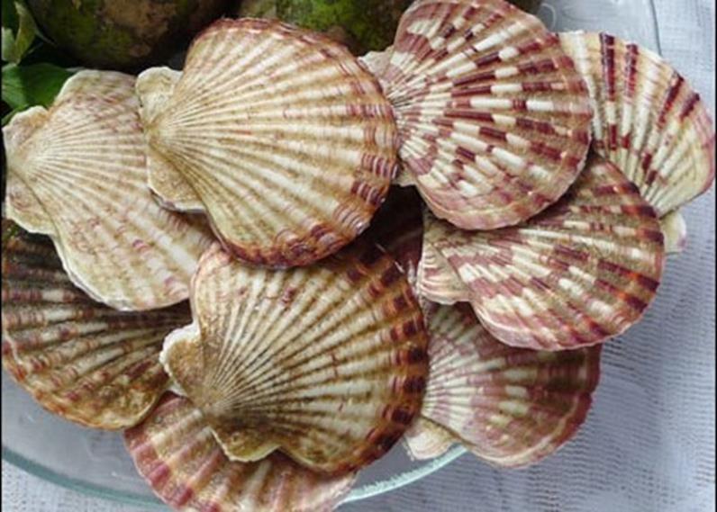 Nam Du - Vietnam seafood - Noble scallop