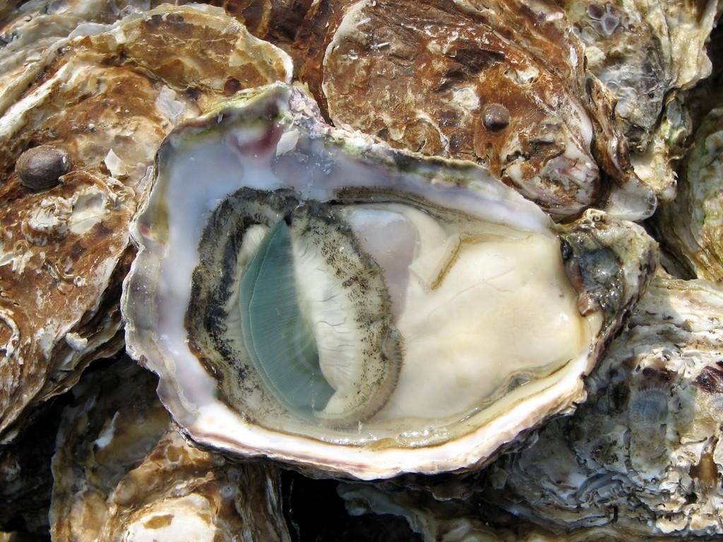 Nam Du - Vietnam seafood - Rock oysters