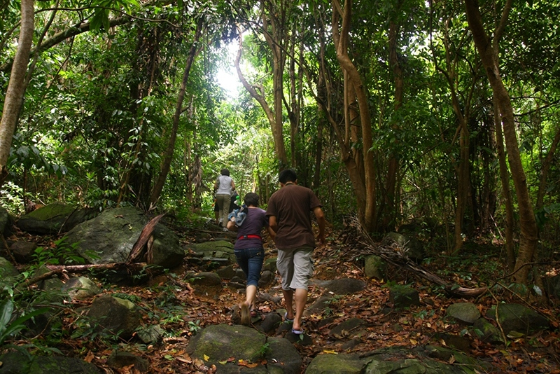 Ong Dung forest, 3 kilometers away from Con Dao National Park center to the west. Photo: landtourcondao.com