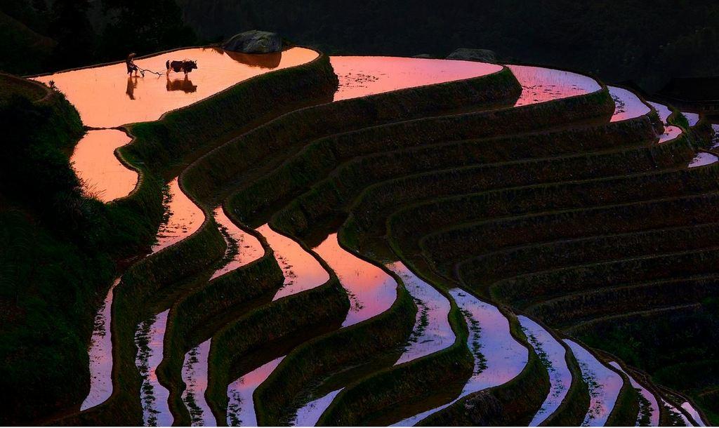 Rice Terraces of Yuanyang 10