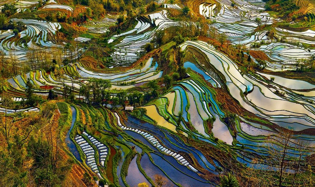 Rice Terraces of Yuanyang 4
