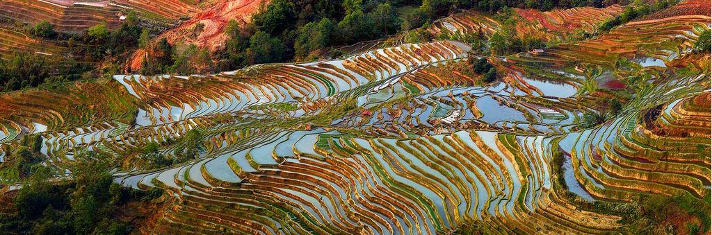 Rice Terraces of Yuanyang 6