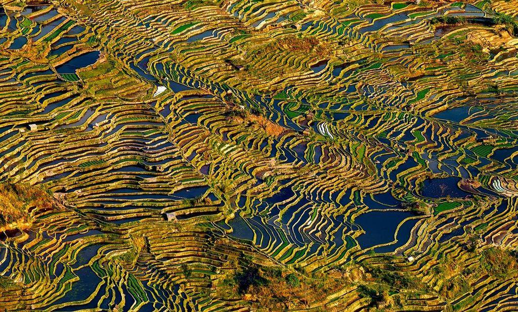 Rice Terraces of Yuanyang 7