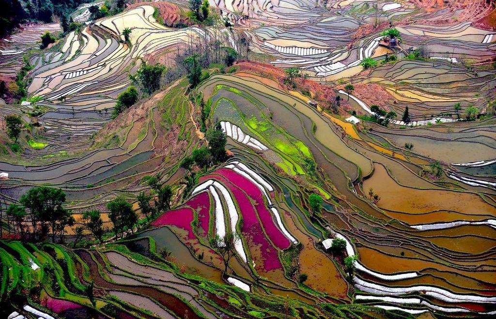 Rice Terraces of Yuanyang 9