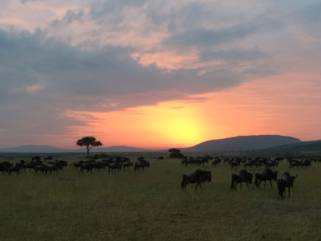 Snapshot of my most peaceful moment: the Masai Mara at sunrise