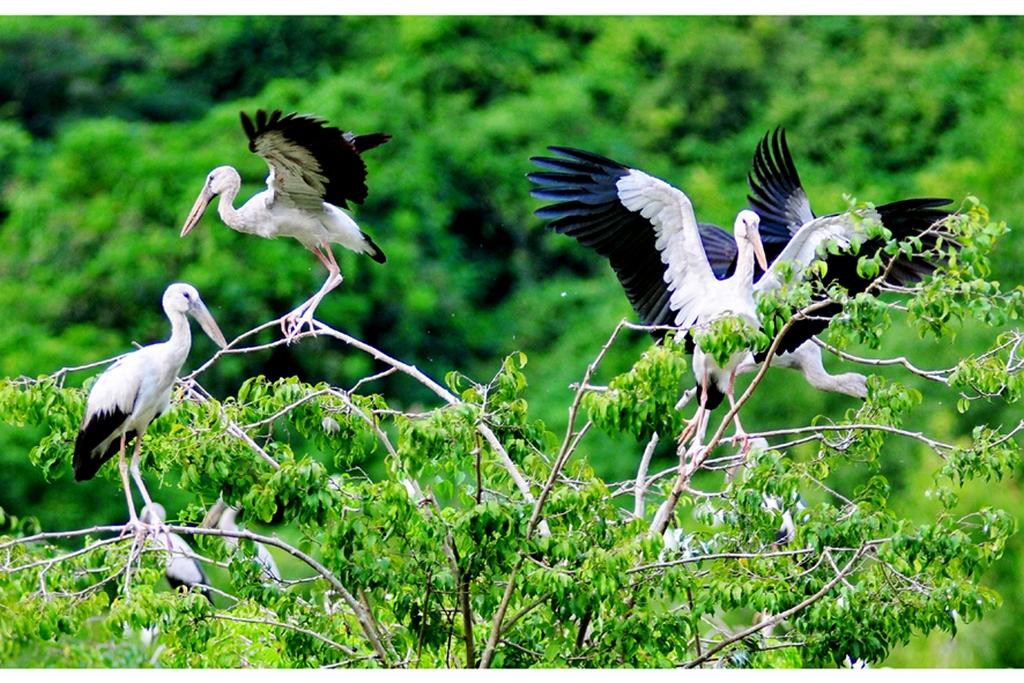 Thung Nham bird park_nguồn: thungnham.info