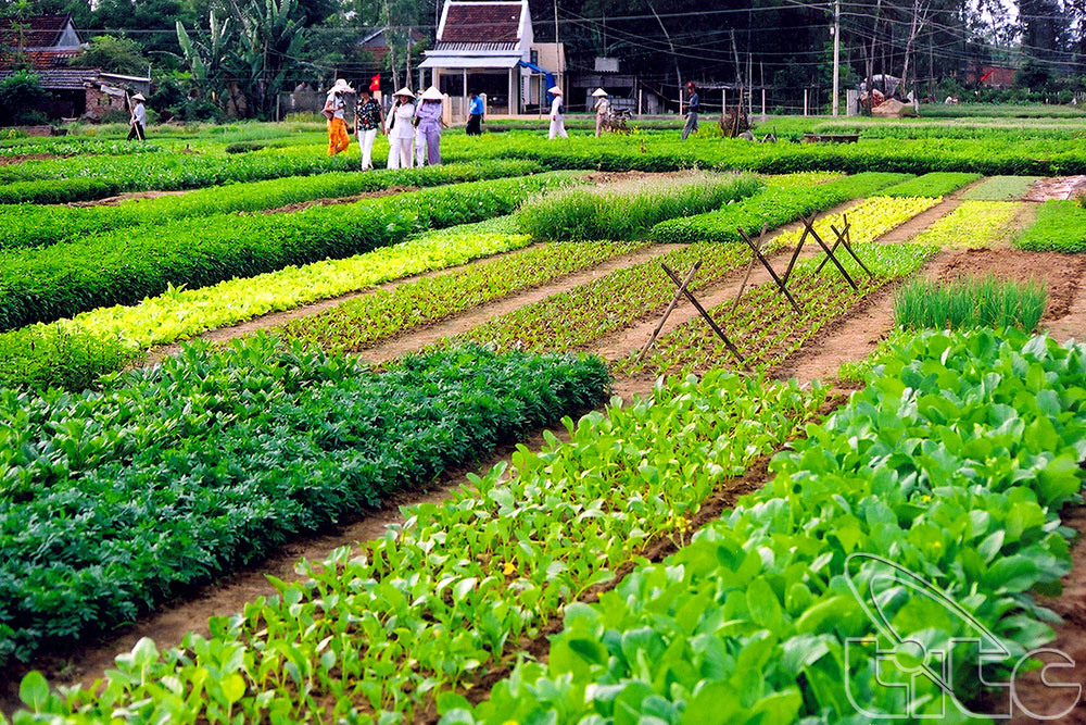 Tra Que vegettables village_ source: vietnamtourism.info