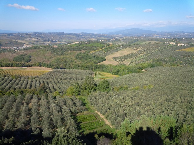 Tuscany-Italy-grape-and-olive-hills
