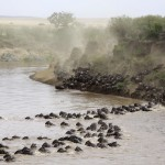 Kenya safari blog — My experience a safari adventure in Kenya