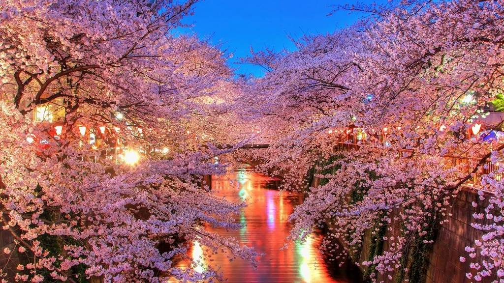 cherry blossom japan 2018 forecast cherry blossom season japan 2018 cherry blossom japan 2018 dates
