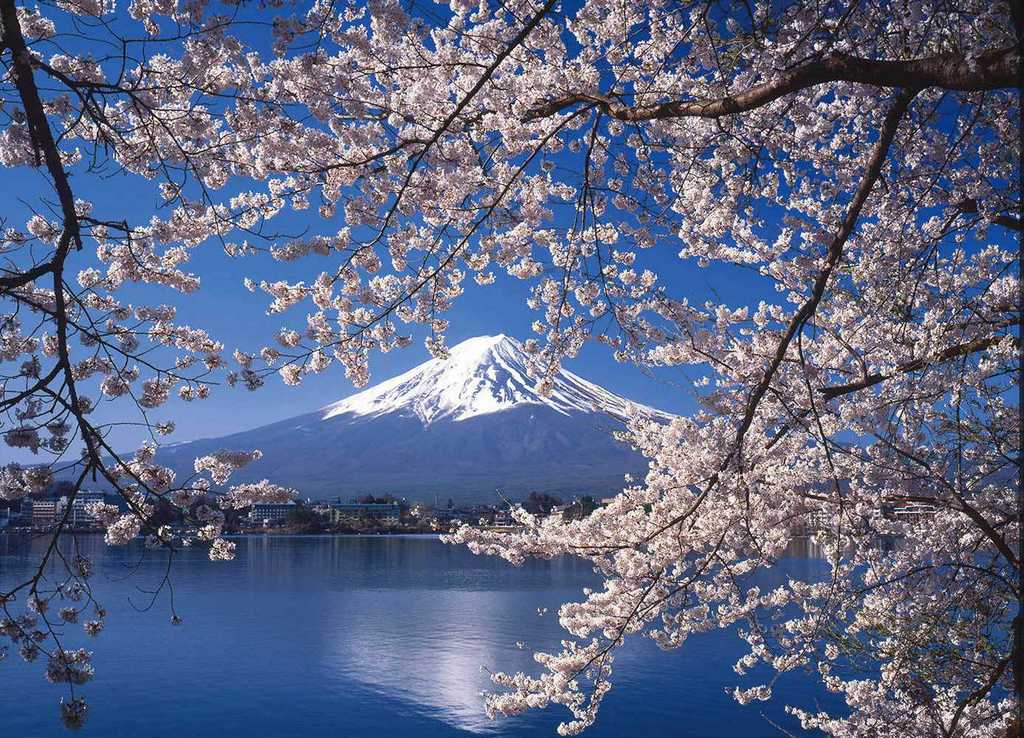 Cherry blossoms in Japan cherry blossom japan 2018 forecast cherry blossom season japan 2018 cherry blossom japan 2018 dates