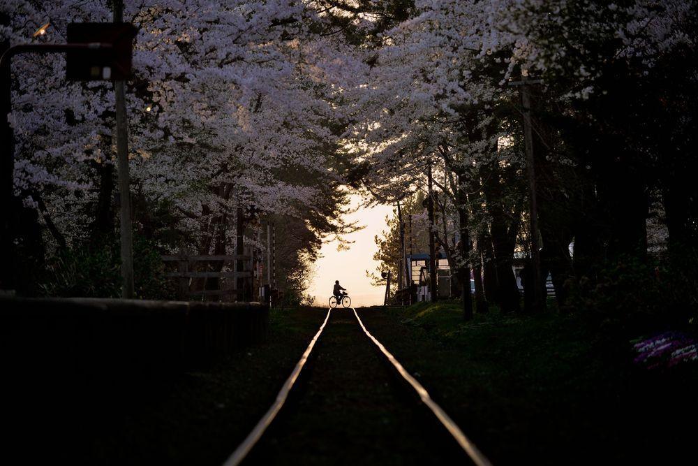 A spring evening Photo: Sho Shibata