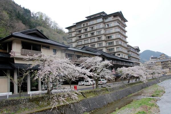cherry blossoms along serence stream Yamagata Japan