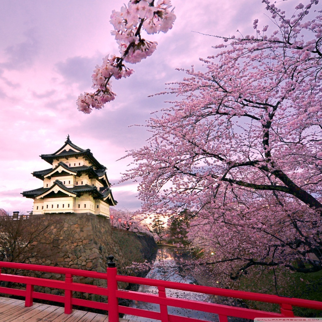 Beautiful Places In Japan Tumblr: 20+ Stunning Pictures Show The Beauty Of Cherry Blossoms