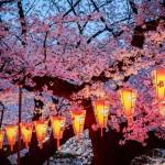 Dreamlike Cherry Blossom (Sakura) tunnel in Japan