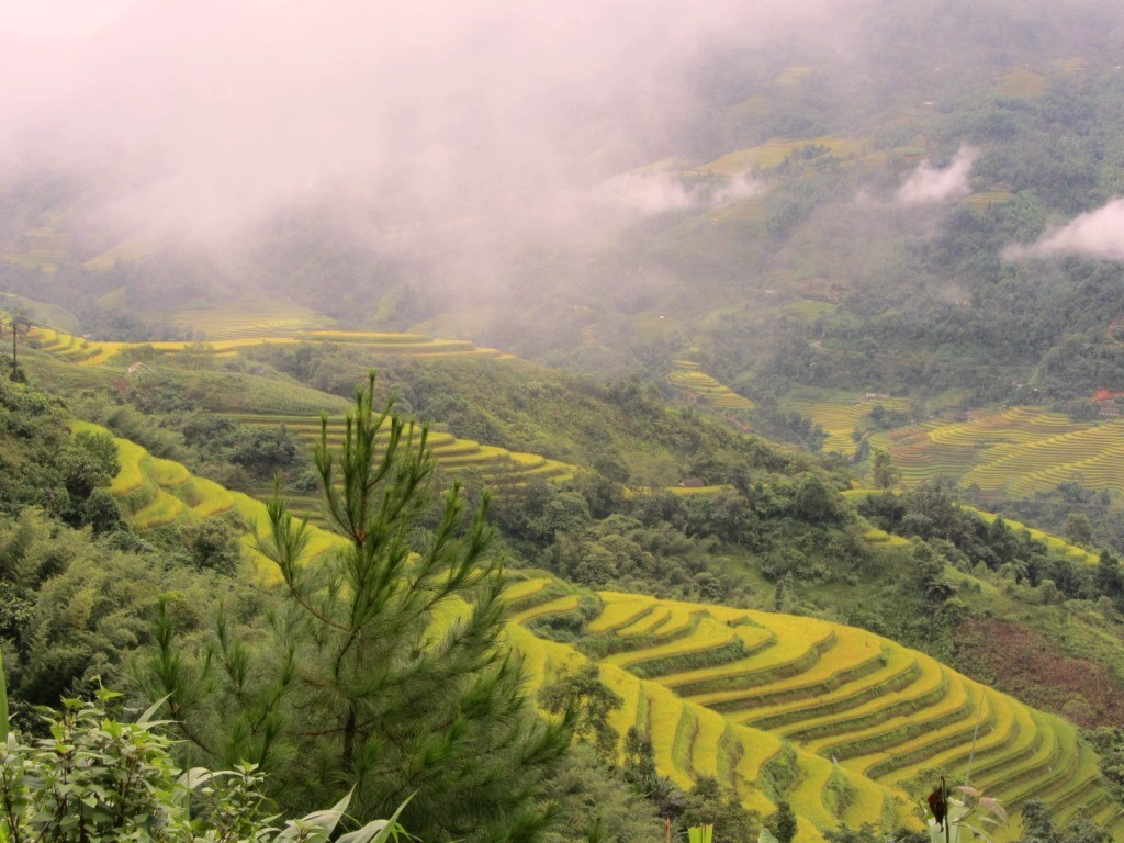 ha giang terraced rice field