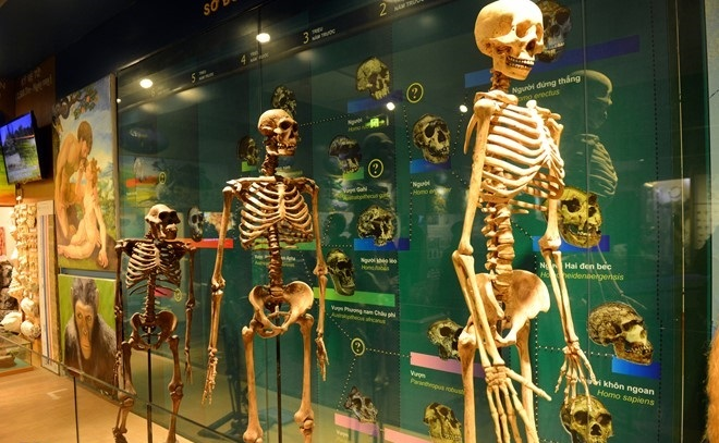 human evolution the national museum of nature in vietnam
