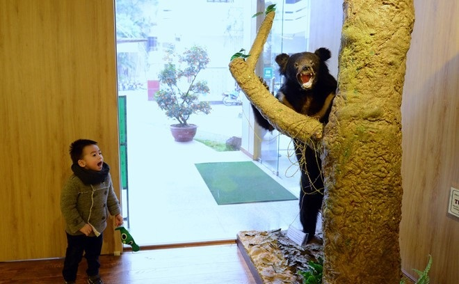 indochina bear the national museum of nature in vietnam