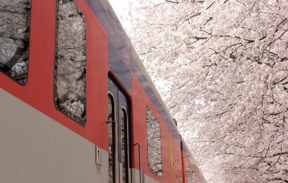 A train passing by in spring Photo: Janvika Shah