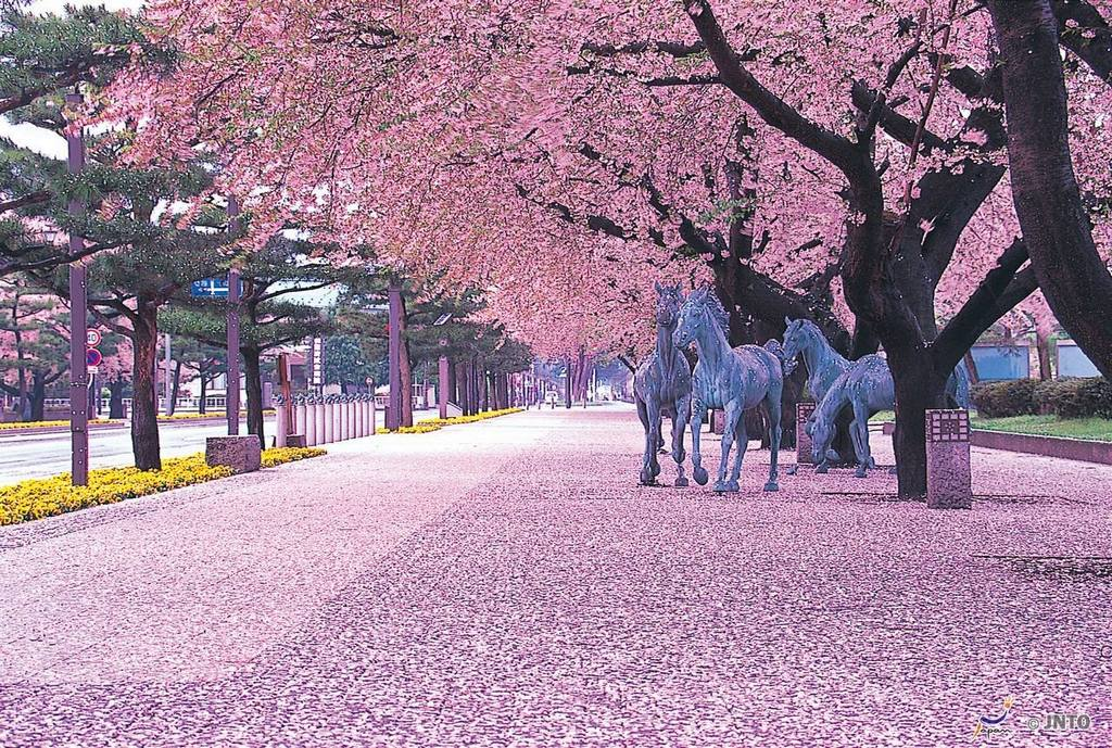 Japan Landscape Cherry Blossom
