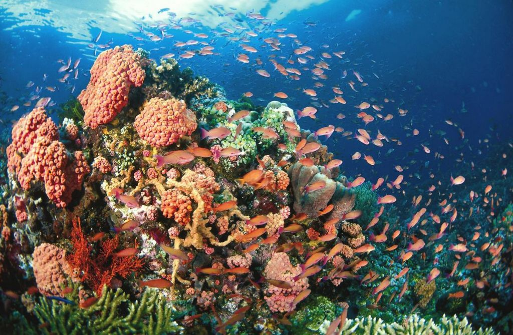 Beautiful coral reef and fish in Koh Rong - Hawaii of Asia Photo: aisiexotictours