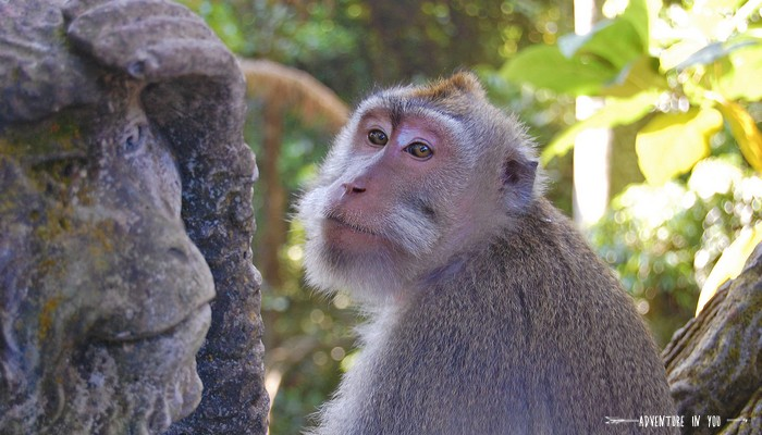 Monkey forest_ source: Adventure in you