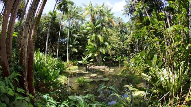 premival rain forest singapore