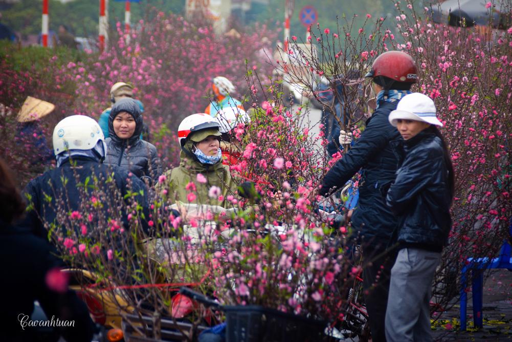 plum flowers at quang ba flowers market hanoi vietnam