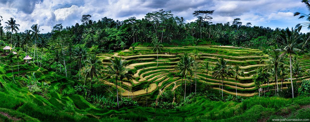 tegalalang-rice-terrace-ydc-bali-tour
