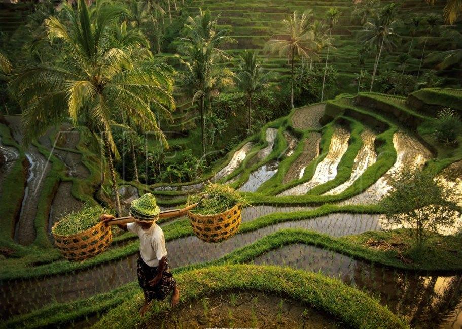 A corner of terraced field at Tegallalang, Bali. Photo: kizie.com