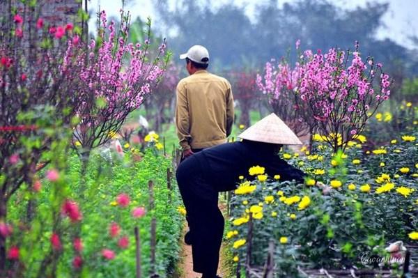 the beautiful flower village stupor