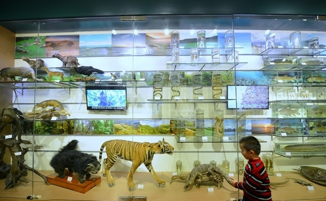 the national museum of nature hanoi
