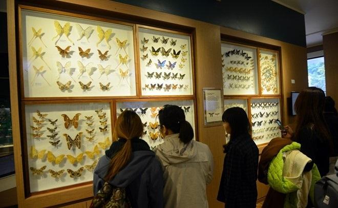 the national museum of nature in vietnam hanoi vnam