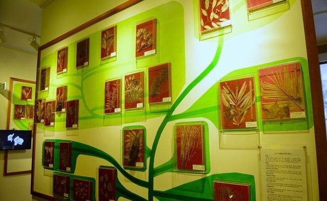 the national museum of nature in vietnam in hanoi in vietnam