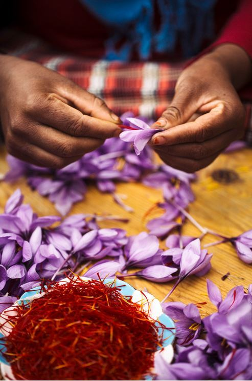 the saffron is quickly separated, dried