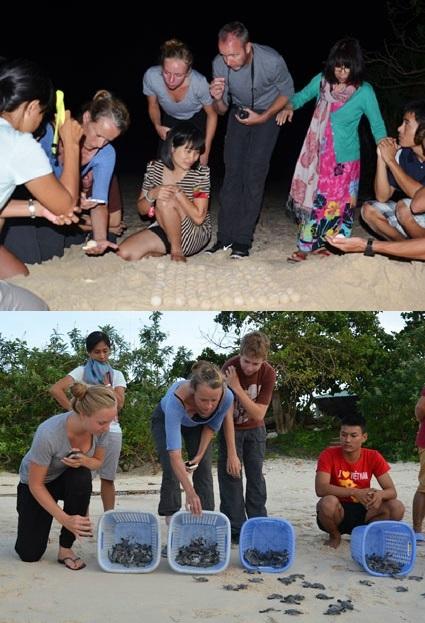 Letting little turtles go back to the sea. Photo: landtourcondao.com
