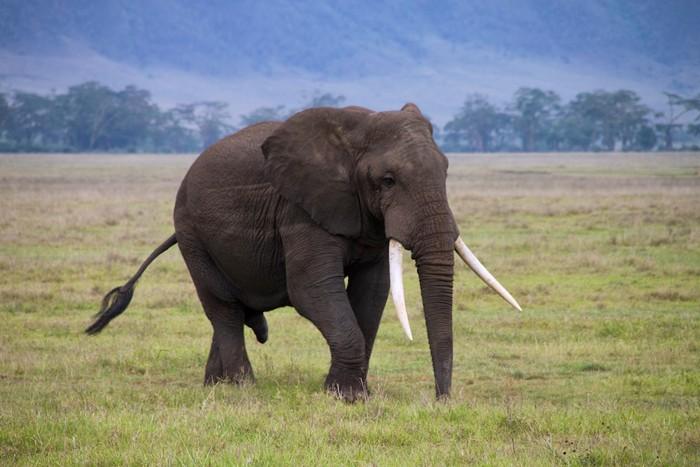wildlife-tanzania-africa