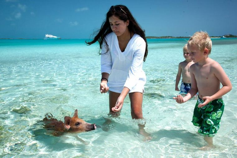 swimming pigs bahamas (1)