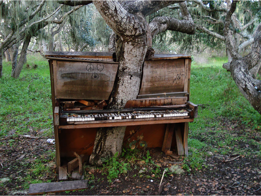 A tree in a piano, California. nature can defeat civilization