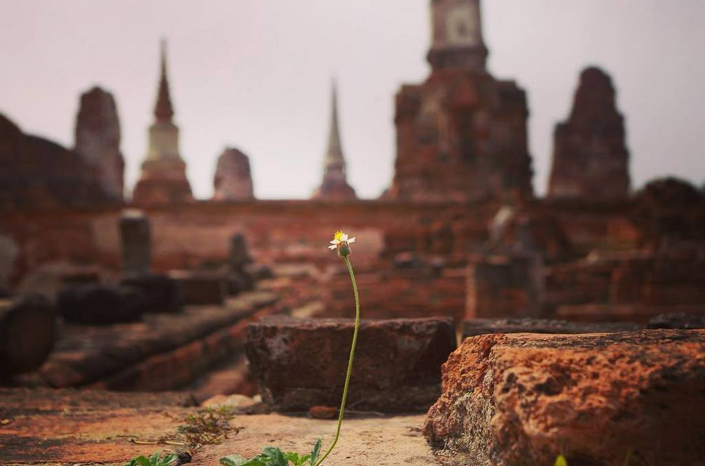 Ayutthaya thai history old temple small flowers tourist attractions photo