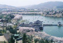 Bomun+Lake+Resort south korea spring trip