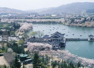 Bomun+Lake+Resort south korea spring trip