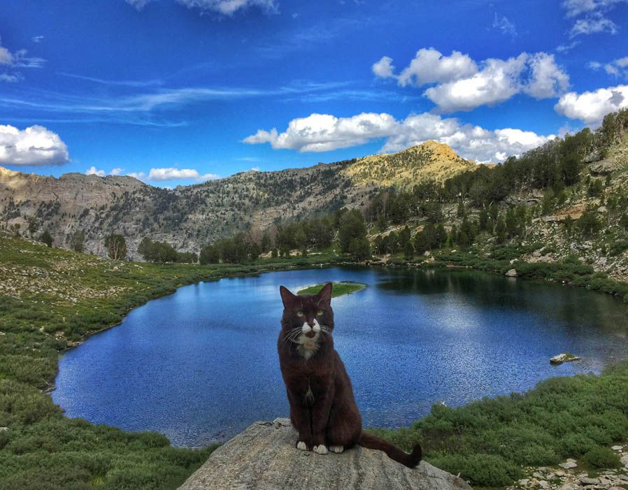 Burma the adventure cat at The Ruby Mountains, Nevada