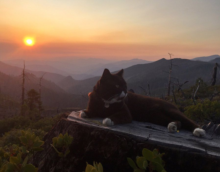 Burma the adventure cat in Oregon