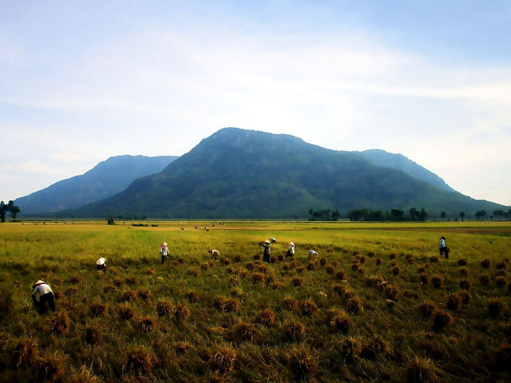 Harvesting at the foot of Cam mountain. Photo: wikimedia.org