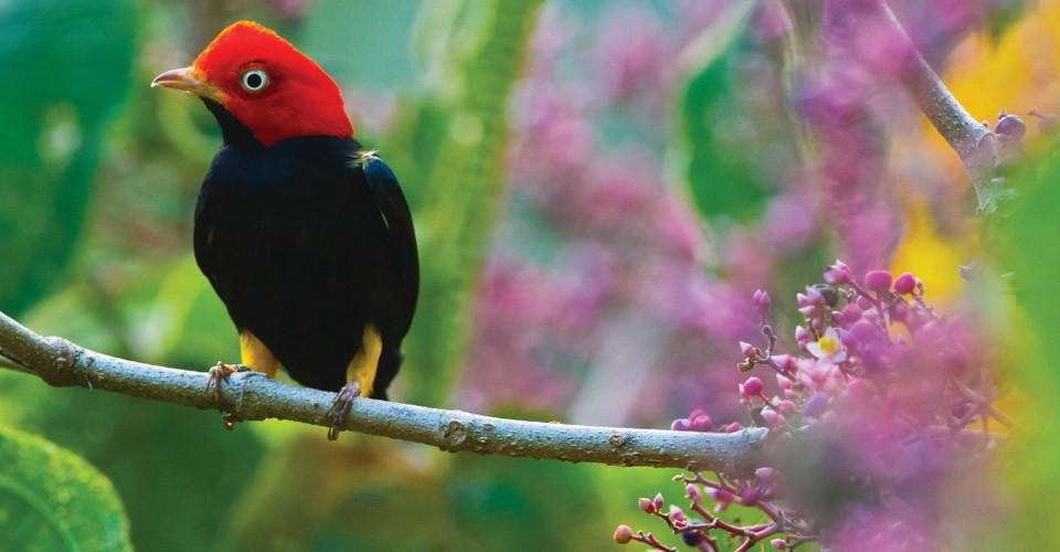 Central-America-Panama-Costa-Rica-Cruise-Bird 23