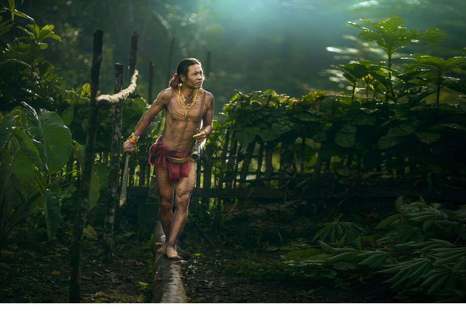 Community living One member of the Mentawai tribe walks through an area where fresh vegetables are grown