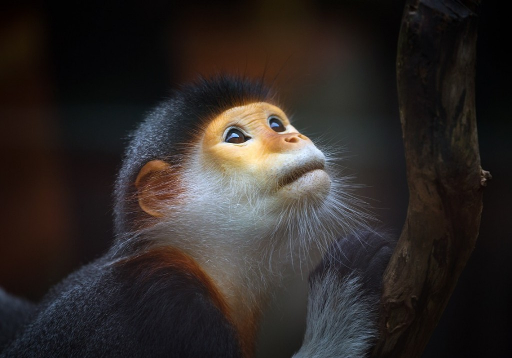 Image from vietnamtravelblogs.com