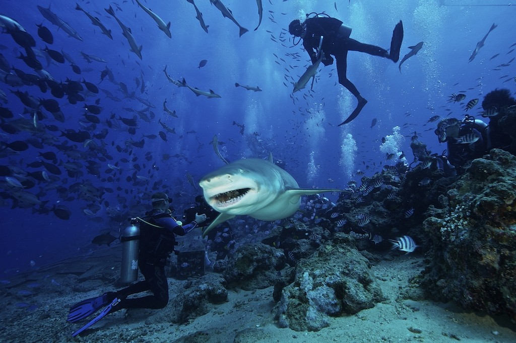 Scuba diving with sharks is a scary experience that not every tourists is willing to try, yet it is unforgetable - A very exciting idea for adventurous visitors to Fiji Photo: naisosoislandresortvillas